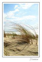 Dune landaise