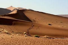 <^dune3^>