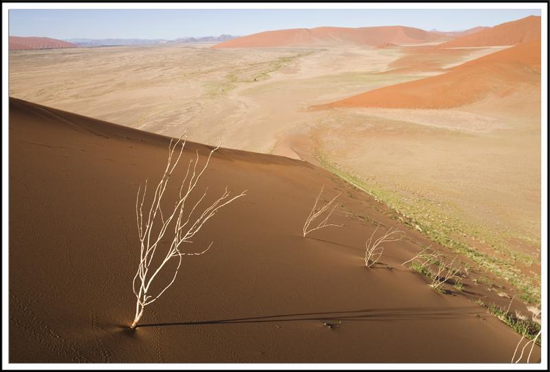 Dunes, desert du Namib