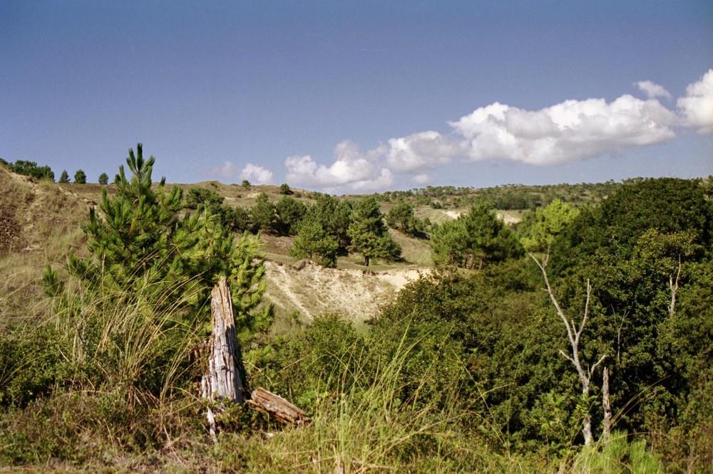 Dunes d'Héauville