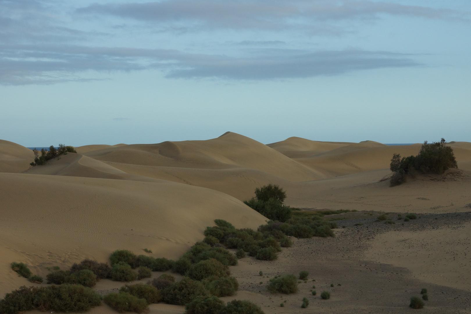 Dunes of Maspalomas 2