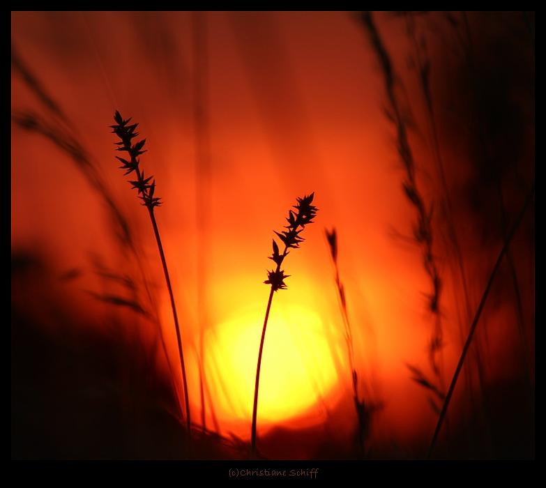 Dunkel im Licht
