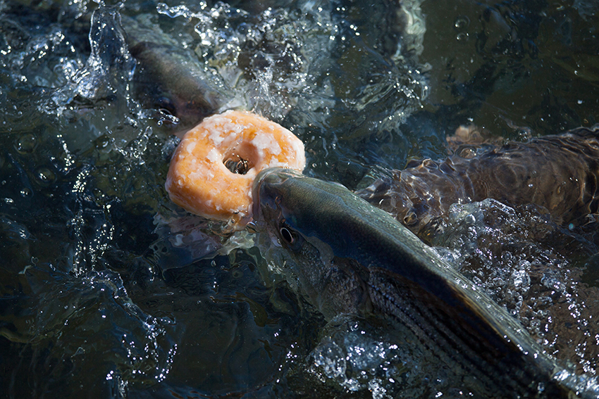 Dunkin´Donut mal anders