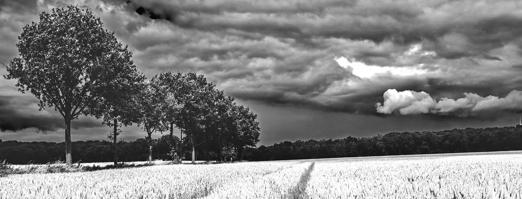 Dunkle Wolken ziehen über unser Land. Ein schwarzer Freitag, daher diese Bilderwahl