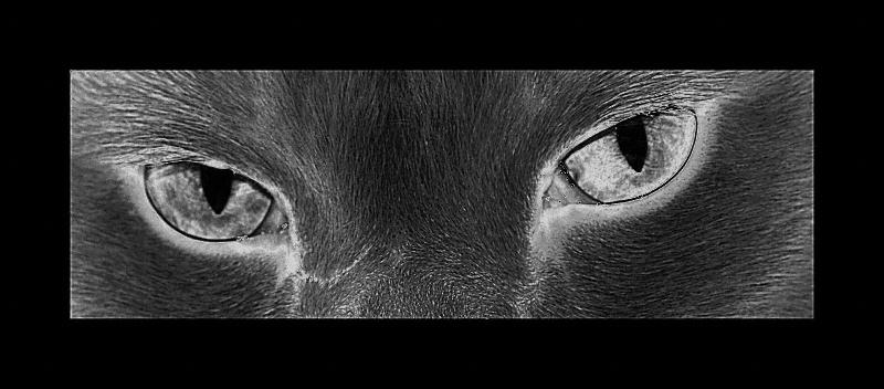 dunkler Katzenblick