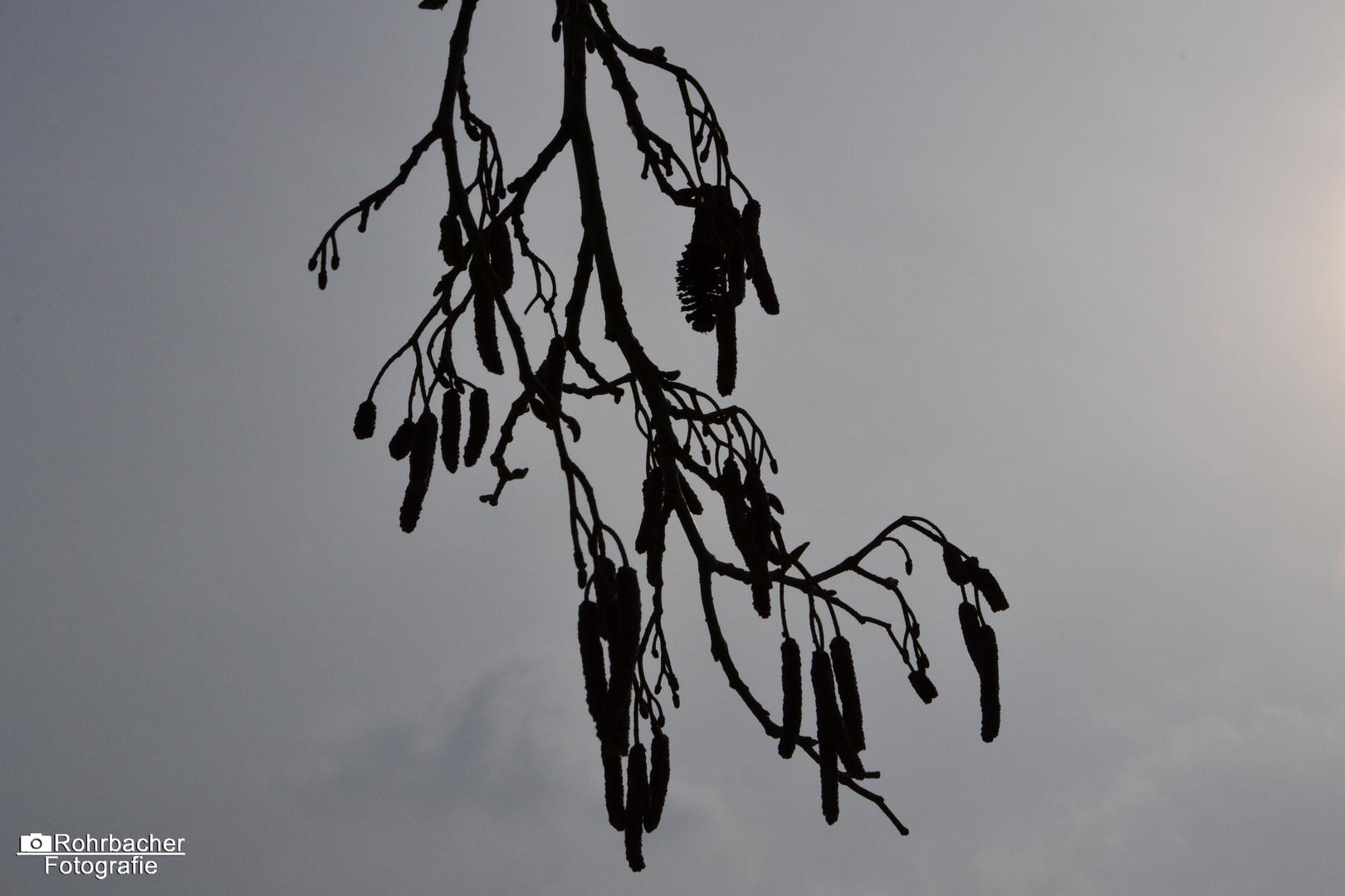Dunkles am Winterhimmel