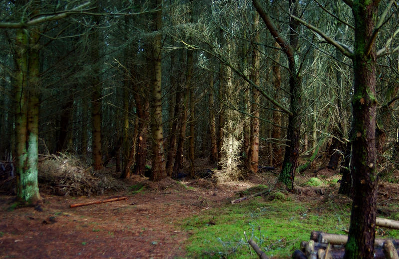 Dunnet Forest