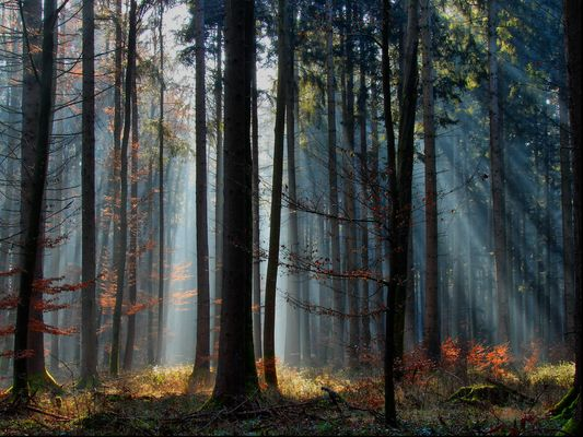 Dunst im Wald