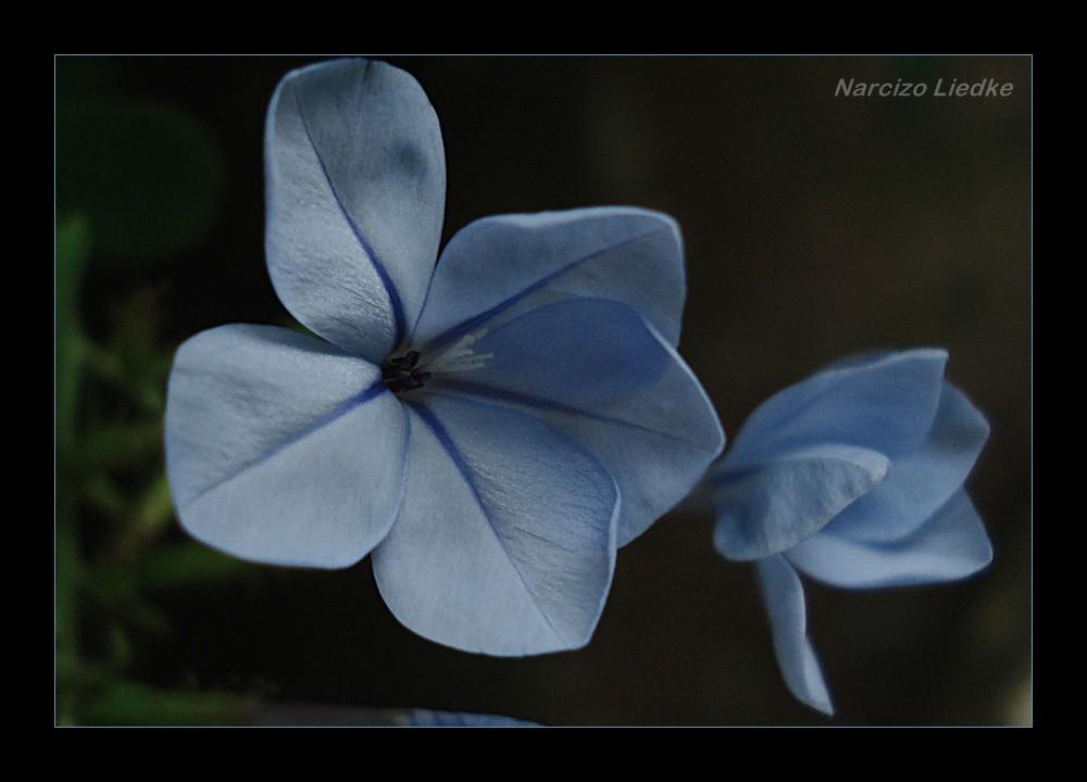 Duo Azul