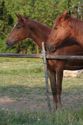 duo de chevaux
