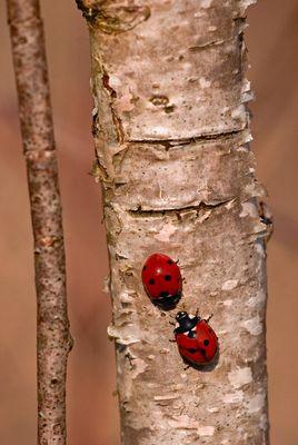 duo sur branche