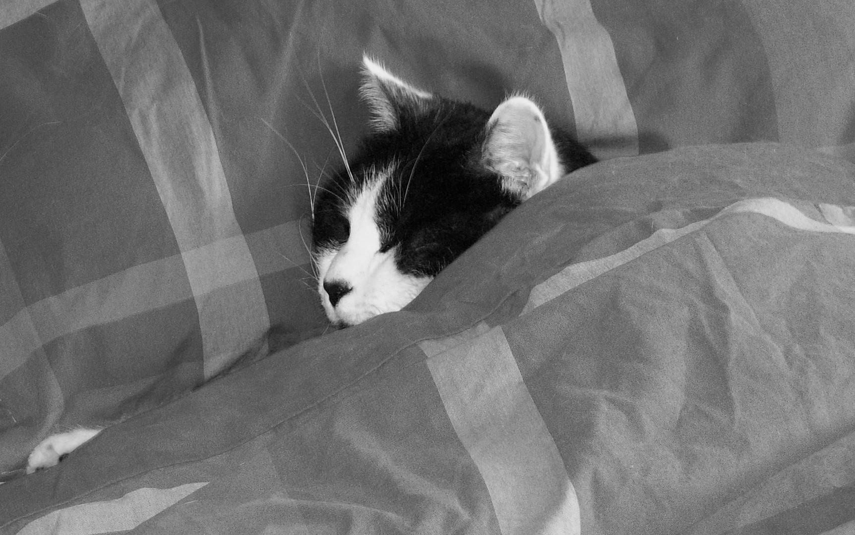 dur dur la vie de chat