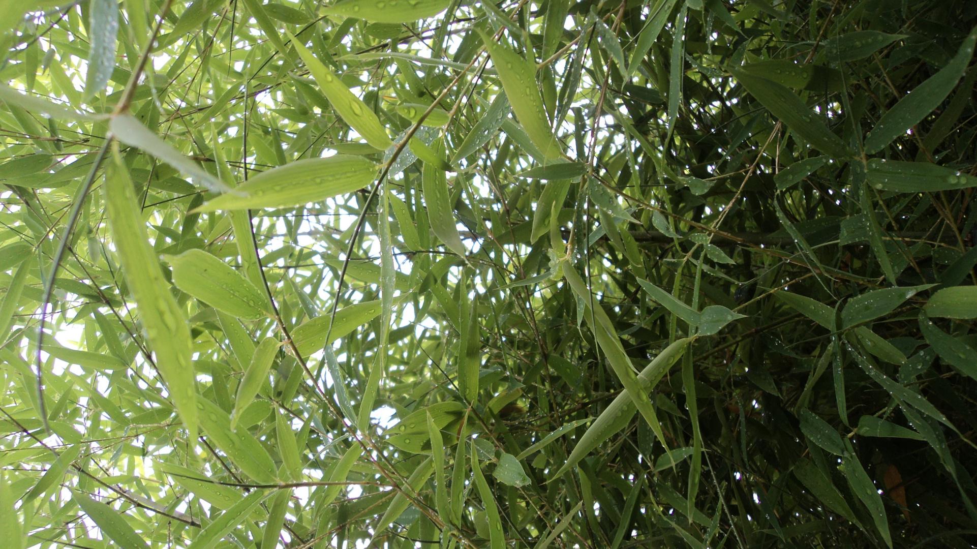 Durch den bambus