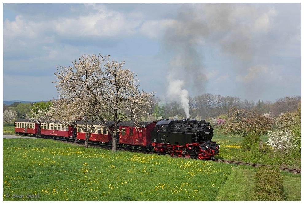 Durch den farbenfrohen Frühling in Gernrode