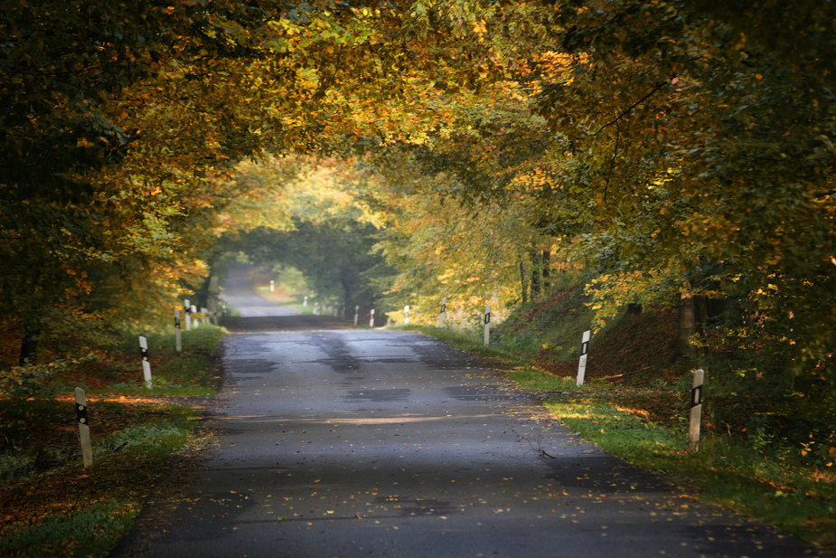 Durch den Herbstwald