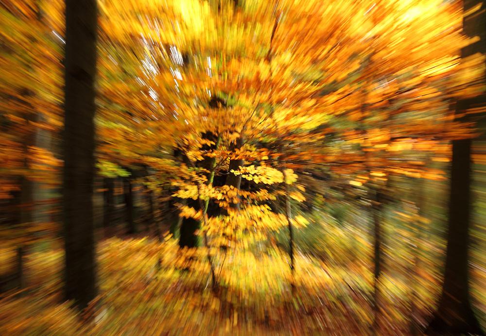 durch den Herbstwald...