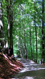 Durch den lichten Hochwald