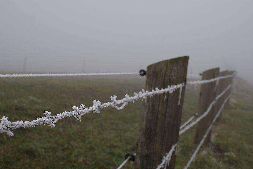 - durch den nebel - 2