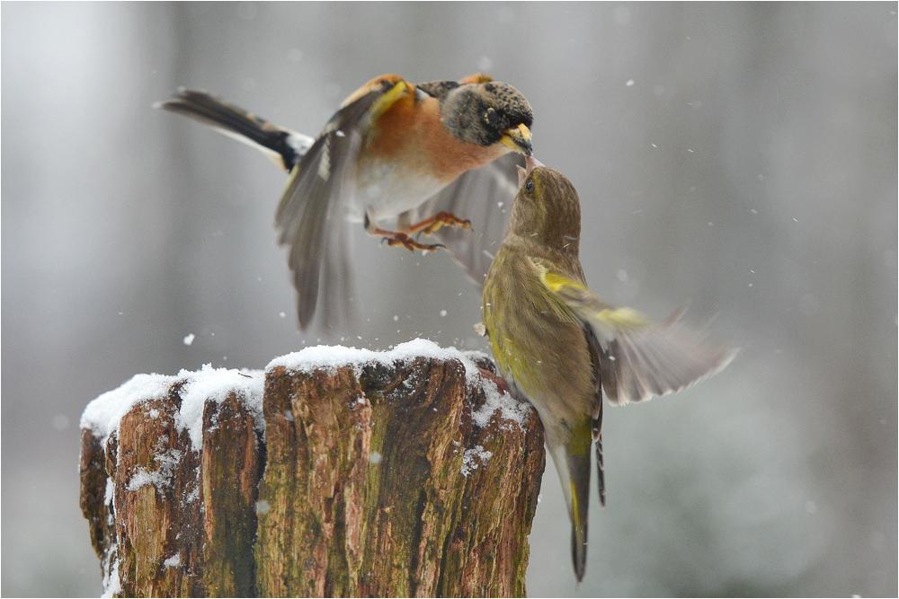 Durch den plötzlichen Wintereinbruch . . .
