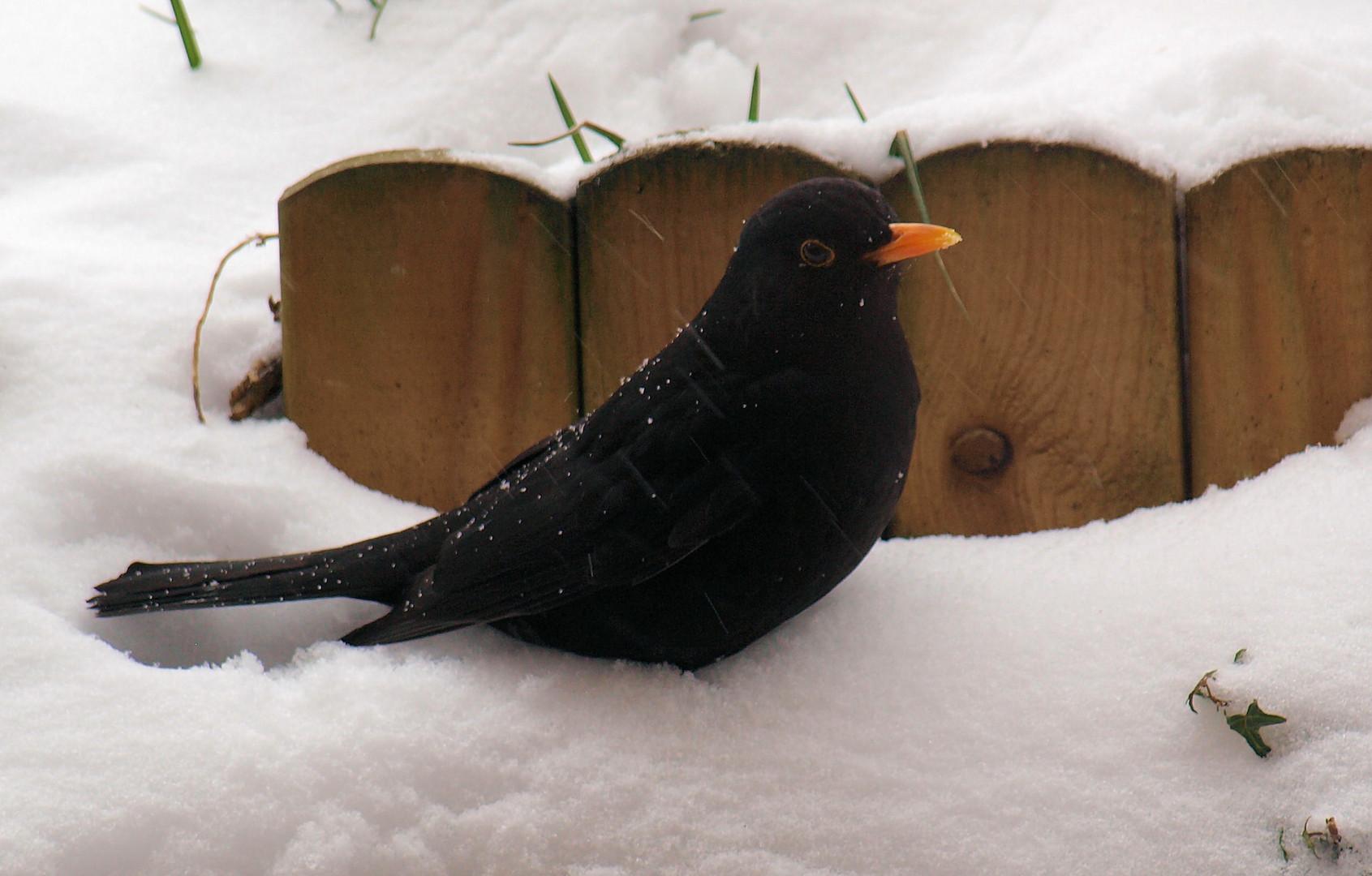 Durch den Schnee.....