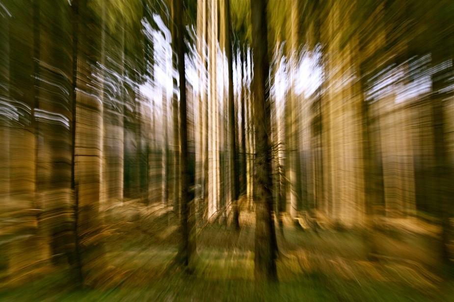 Durch den Wald gehuscht (2)