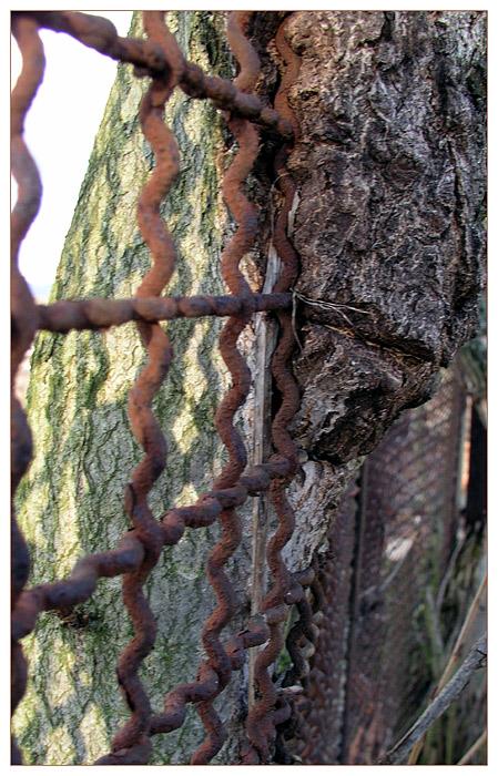 durch den Zaun