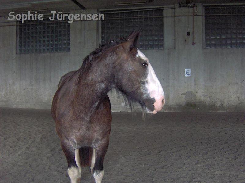 Durch dich habe ich erfahren was Pferdeliebe bedeutet!