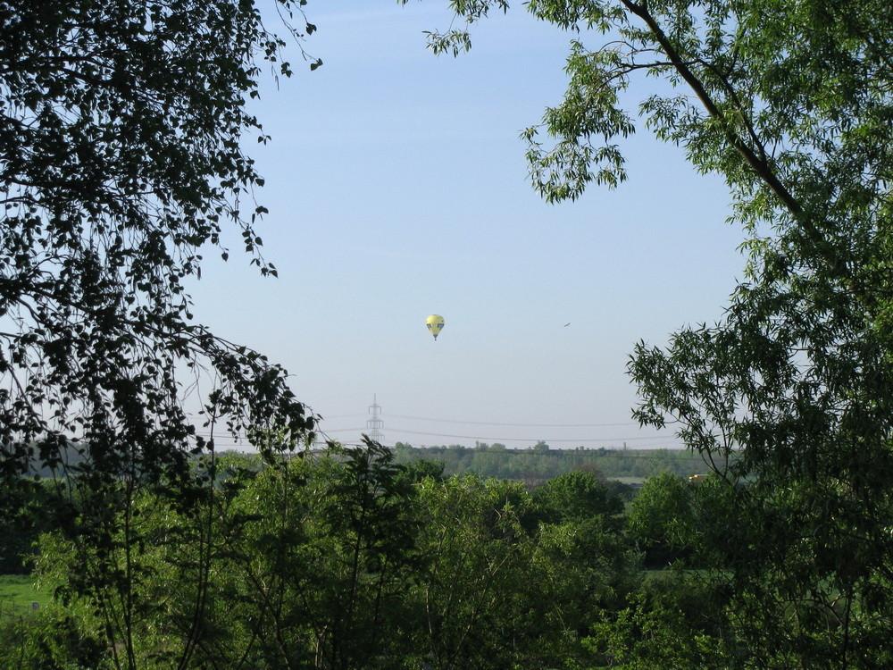 Durch die Bäume fliegen?