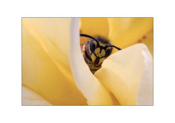 durch die Blüte gelugt
