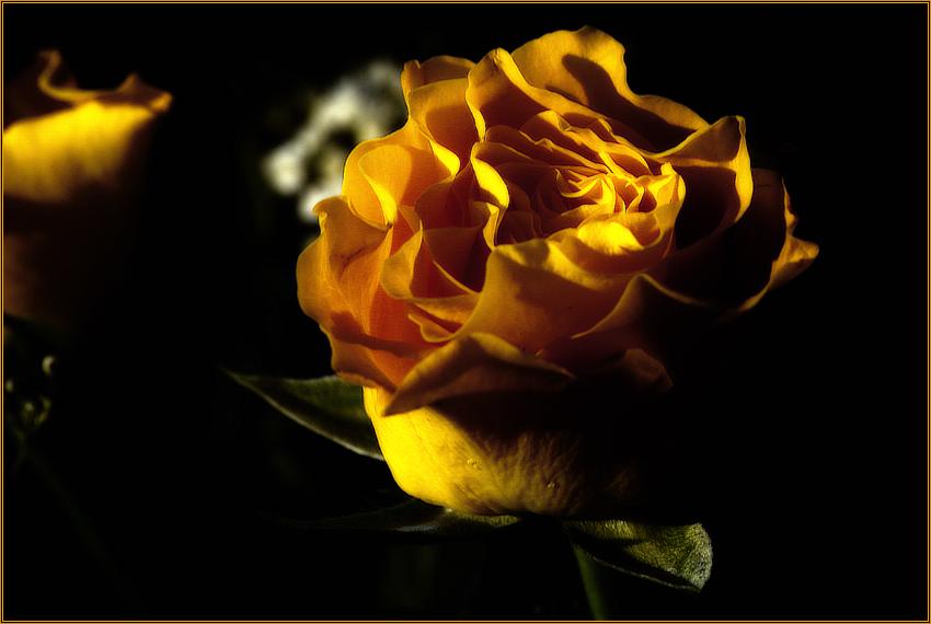 Durch die Blume...