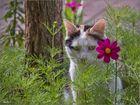 - durch die Blume ... -