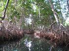 Durch die Mangroven