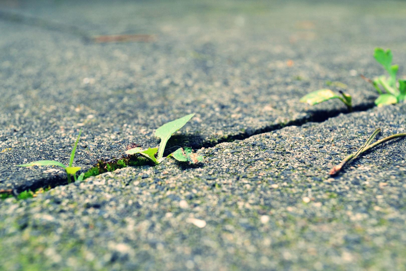 Durch Steine wachsen Pflanzen