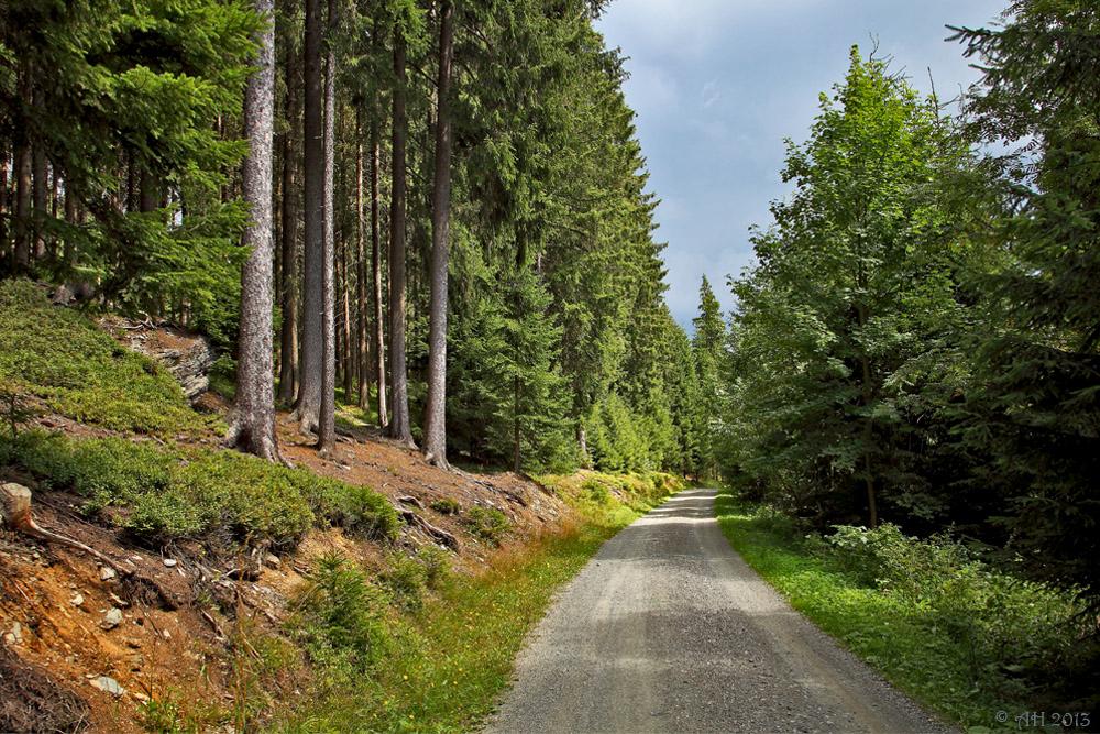 Durch Vogtlands grüne Wälder