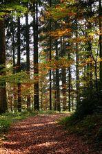 durch Wald und Laub streifen