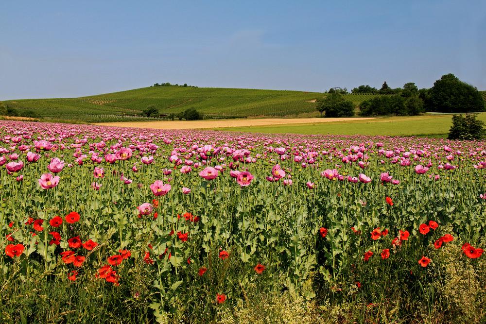 Durch Wiesen und Felder...