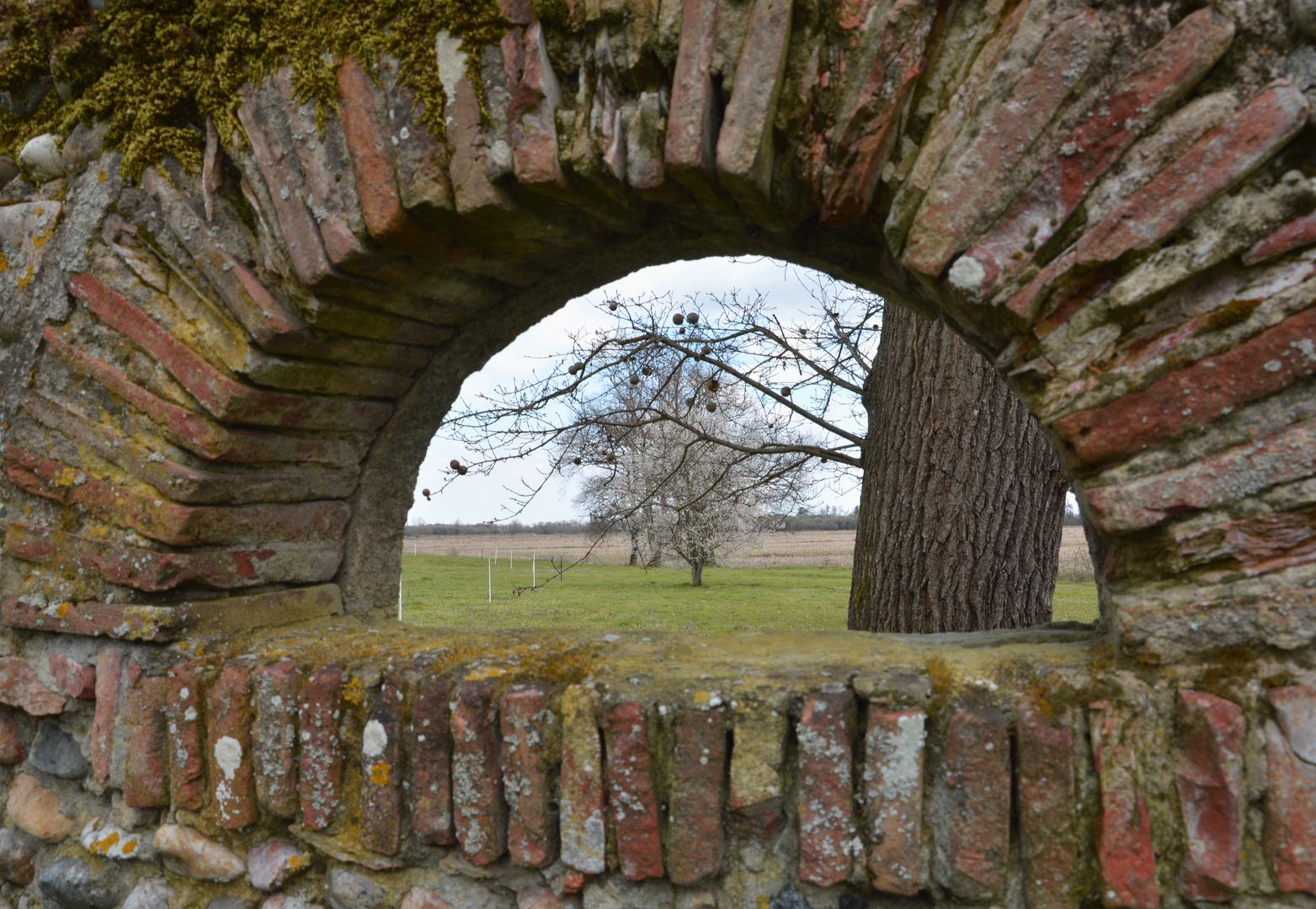 Durchblick zum blühenden Kirschbaum
