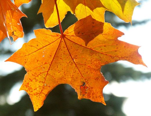 Durchleuchtet von der Novembersonne