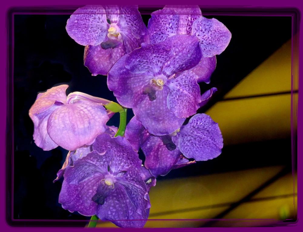 durch´s Fenster eines Blumenladens aufgenommen