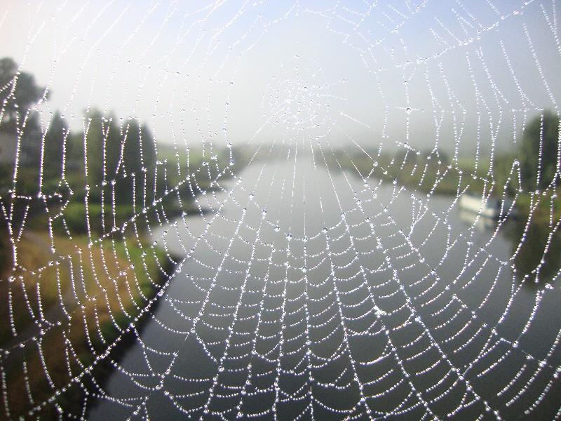 Durchs Spinnennetz