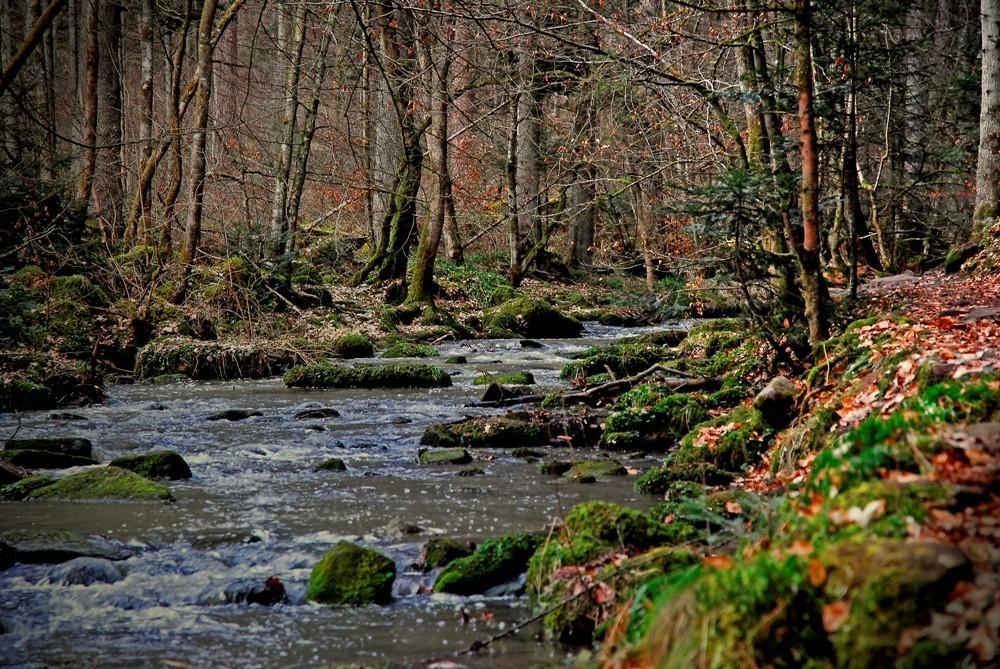 Durchs wilde Monbachtal - The wild Monbach valley