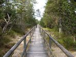 Durchs Wildseemoor
