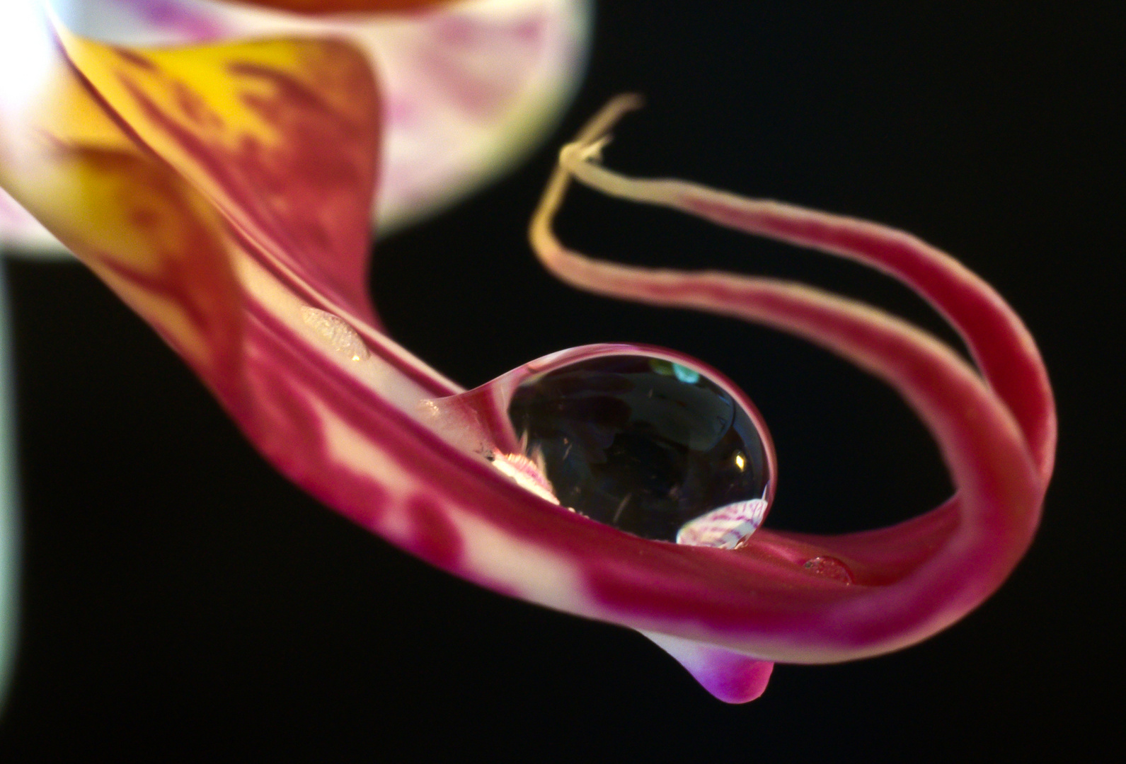 Durstige Orchidee.
