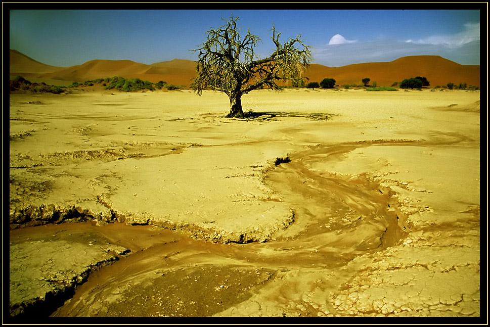 Durstiger Baum