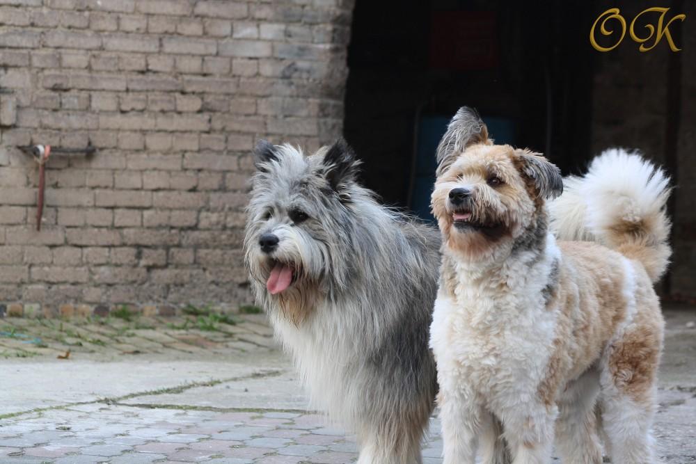 Dusty und Mailo (Elos)
