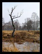 ...duvenstedter brook III...