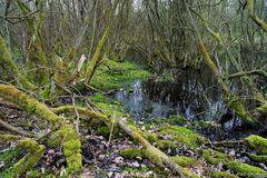 Duvenstedter Moor 2