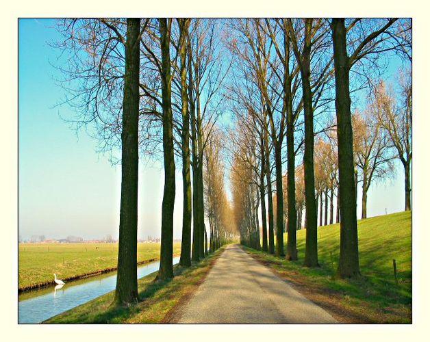 Dyke-road, Drongelen (NL)