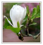 Dynamique magnolia