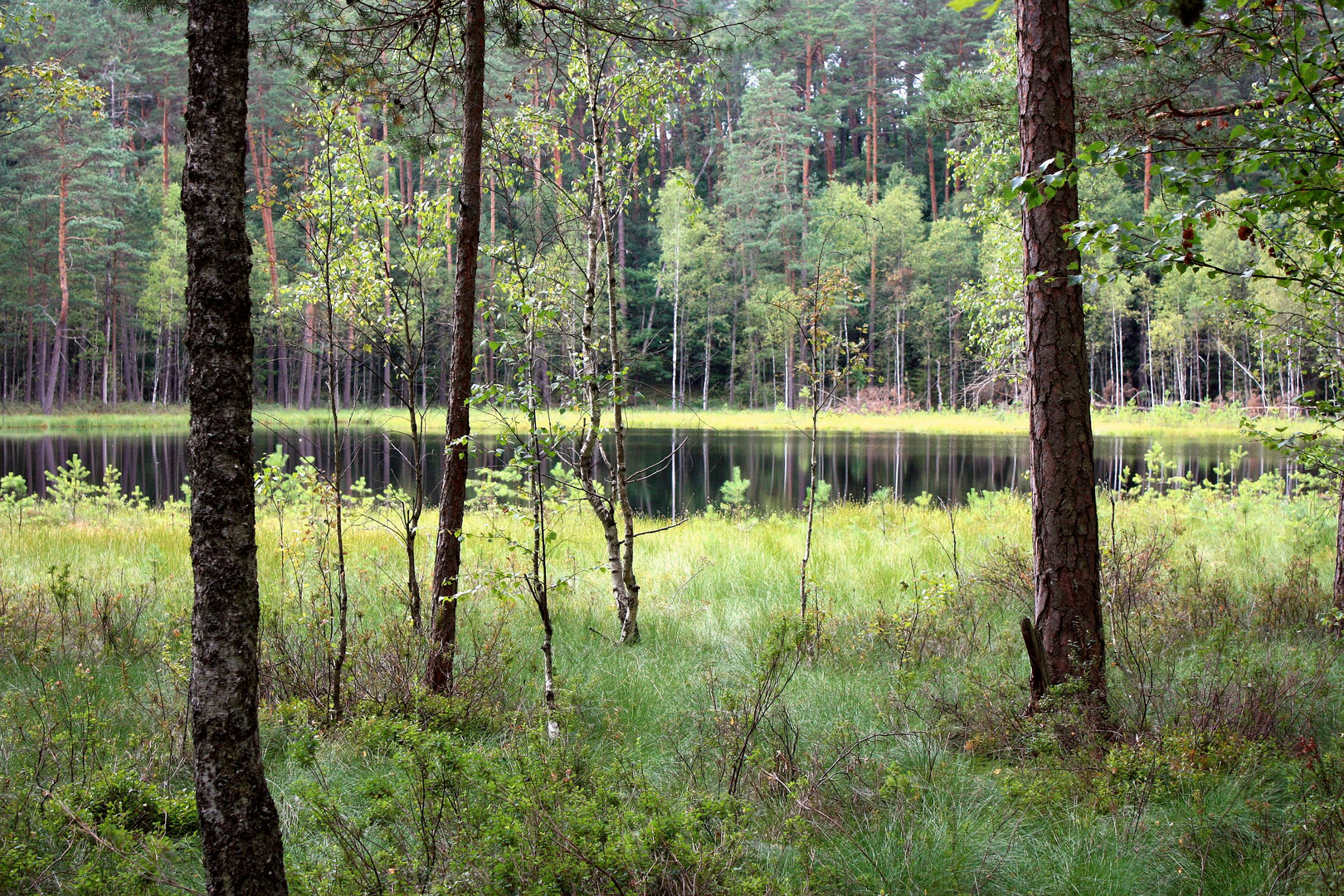 Dystrophic lake in Krutynia